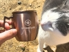 Moscow-Mule-CAT-logo